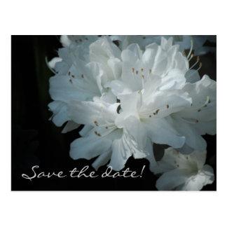 Las azaleas blancas ahorran la postal de la fecha