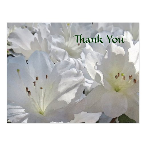 Las azaleas blancas de la acuarela le agradecen po tarjeta postal
