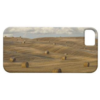 Las balas y el balanceo de heno ajardinan, Toscana iPhone 5 Case-Mate Cárcasa