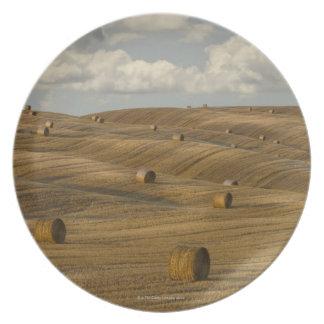 Las balas y el balanceo de heno ajardinan, Toscana Platos