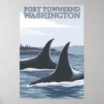 Las ballenas #1 de la orca - vire a Townsend hacia Poster