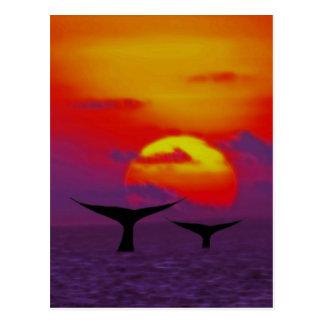 Las ballenas atan en la puesta del sol postal