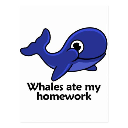 Las ballenas comieron mi preparación tarjetas postales