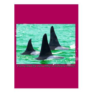 Las ballenas de la orca vienen navegación el día d tarjetas postales