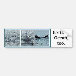 Las ballenas, es su océano también pegatina para auto