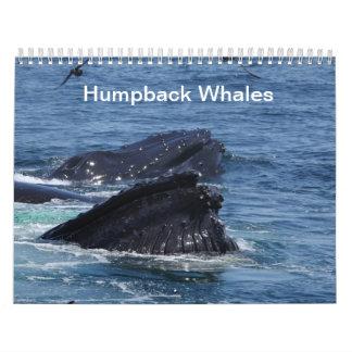 Las ballenas jorobadas hacen calendarios 2014