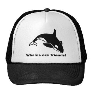 Las ballenas son amigos gorros