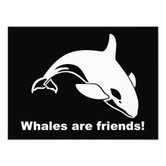 Las ballenas son amigos fotos