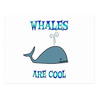 Las ballenas son frescas postales