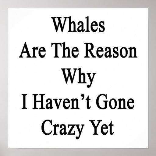 Las ballenas son la razón por la que no he ido loc posters