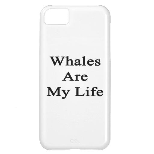 Las ballenas son mi vida