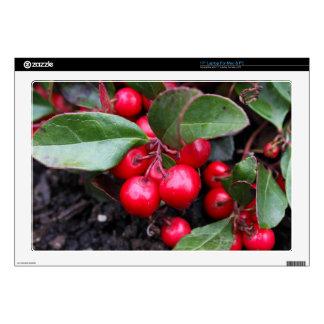 Las bayas rojas en un teaberry forran el procumbe 43,2cm portátil calcomanía