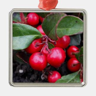 Las bayas rojas en un teaberry forran el procumbe adorno navideño cuadrado de metal