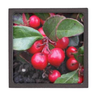 Las bayas rojas en un teaberry forran el procumbe caja de recuerdo de calidad