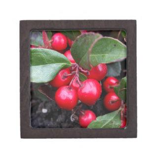 Las bayas rojas en un teaberry forran el procumbe cajas de joyas de calidad