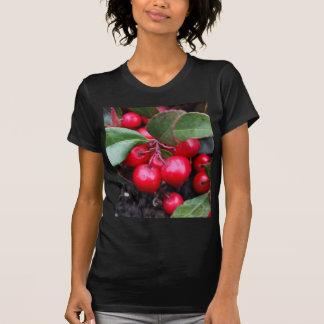 Las bayas rojas en un teaberry forran el procumbe camisas