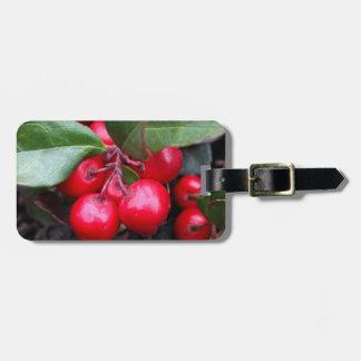 Las bayas rojas en un teaberry forran el procumbe etiquetas maletas