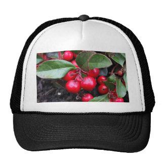 Las bayas rojas en un teaberry forran el procumbe gorra