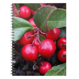 Las bayas rojas en un teaberry forran el procumbe libretas espirales