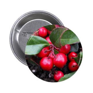 Las bayas rojas en un teaberry forran el procumbe pin redondo de 2 pulgadas