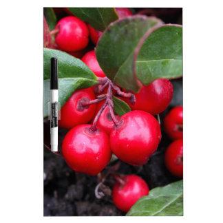 Las bayas rojas en un teaberry forran el procumbe pizarras