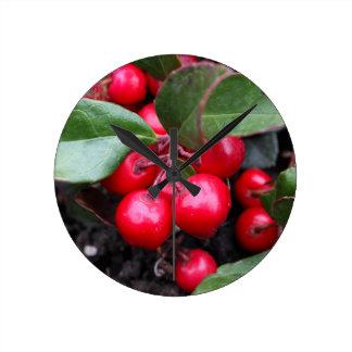 Las bayas rojas en un teaberry forran el procumbe reloj redondo mediano