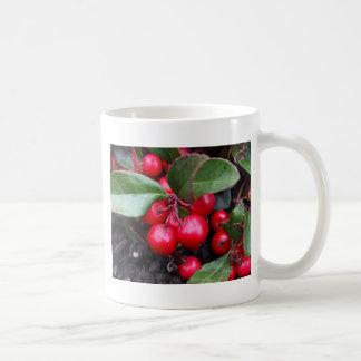 Las bayas rojas en un teaberry forran el procumbe taza