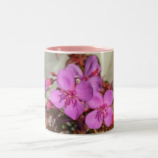 Las begonias asaltan - elija el estilo y el color, tazas de café