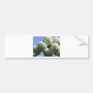 Las bolas del hydrangea blanco florecen contra el pegatina para auto