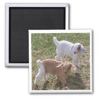 Las cabras de la hermana imán de frigorífico