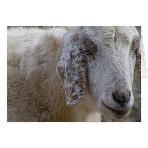 ¡Las cabras hacen frente a sonrisa! Tarjeta De Felicitación