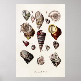 Las cáscaras del mar del vintage personalizaron el póster