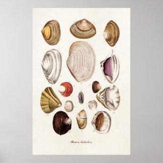 Las cáscaras del mar del vintage personalizaron la póster