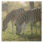 Las cebras de Burchell, burchelli del Equus Azulejo Cuadrado Grande