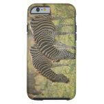 Las cebras de Burchell, burchelli del Equus Funda Resistente iPhone 6