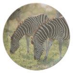 Las cebras de Burchell, burchelli del Equus Platos De Comidas