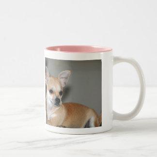 Las chihuahuas son el mejor taza de café de dos colores