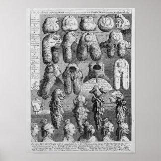 Las cinco órdenes de Perriwigs, 1761 Póster