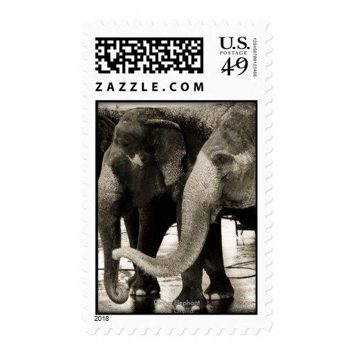 Las cosquillas del tronco timbres postales