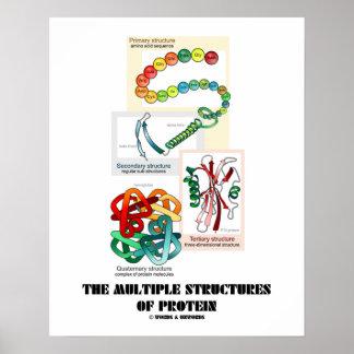 Las estructuras múltiples de la proteína (biología póster