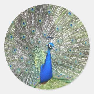 Las fans indias masculinas de un pavo real es pegatinas redondas