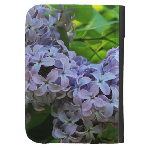 Las floraciones de la lila encienden la caja