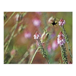 Las floraciones rosadas y manosean la abeja tarjeta postal