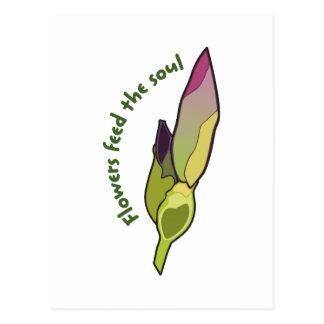 Las flores alimentan el alma tarjeta postal