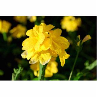 las flores amarillas se cierran encima de imagen f escultura fotográfica
