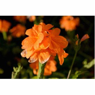 las flores anaranjadas se cierran encima de imagen escultura fotográfica
