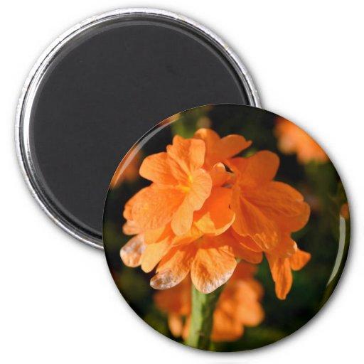 las flores anaranjadas se cierran encima de imagen imán de frigorífico