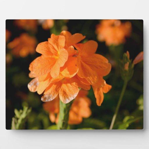 las flores anaranjadas se cierran encima de imagen placa de plastico