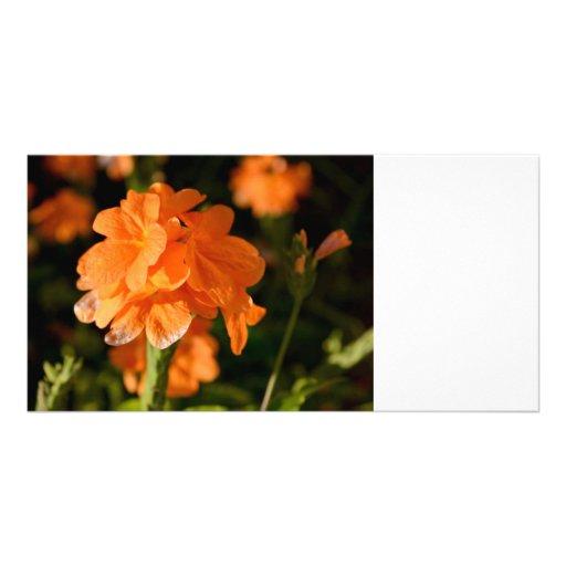 las flores anaranjadas se cierran encima de imagen tarjeta con foto personalizada