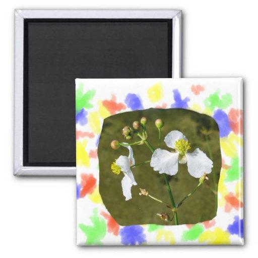 Las flores blancas amarillas se centran alrededor  imán para frigorifico